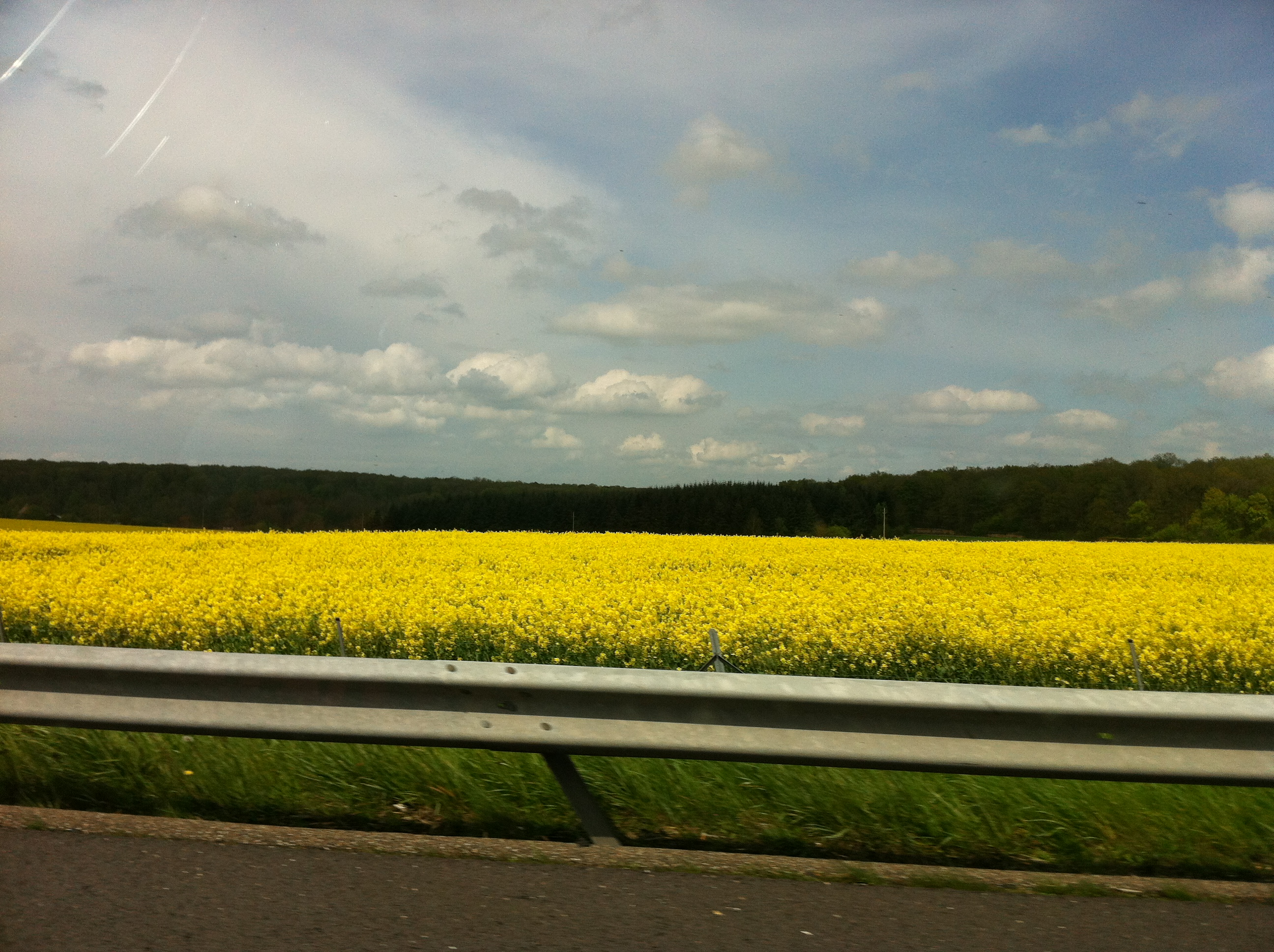 No idea what these are, but they're everywhere on the way to Normandy.