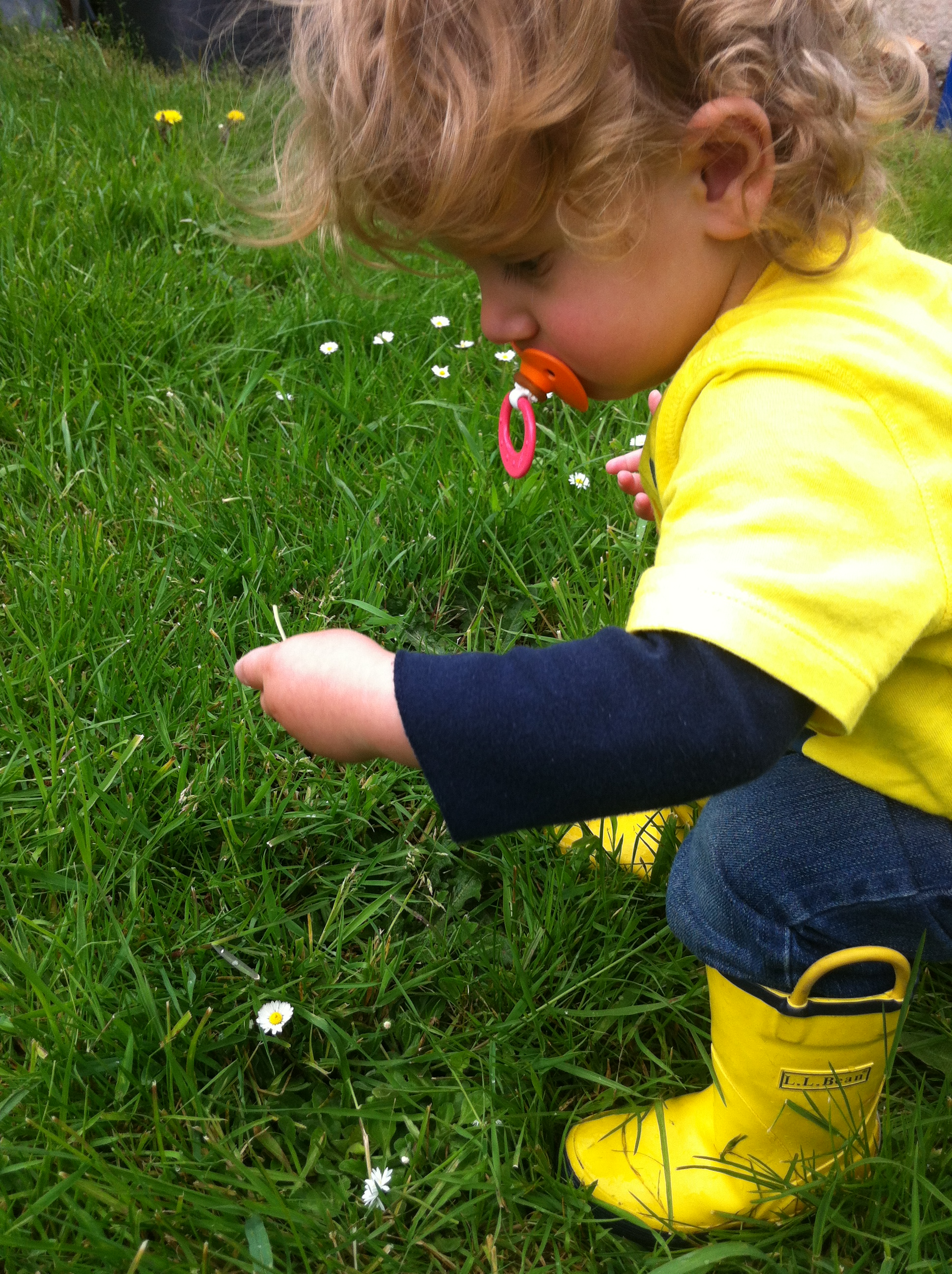 Liam attacks the daisies.