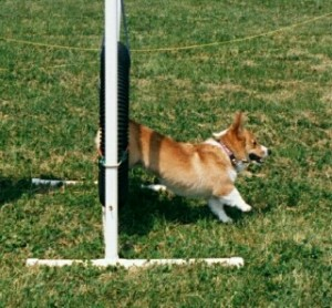Bailey Agility (jump)Corgi Fun Fair5/12/2001